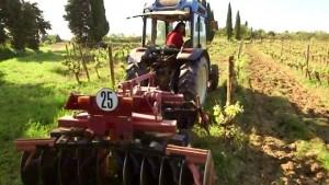 En quête du vin nature