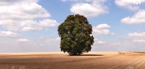 À chacun son arbre